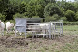 Kraftfôrautomat til kalv