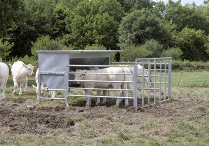 Kraftfôrautomat for kalv på beite